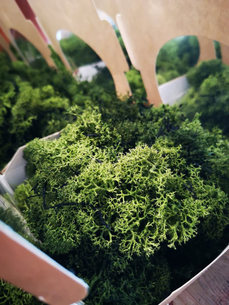 Picture of Preserved Finland moss