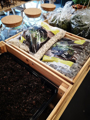 Picture of Terrarium stones