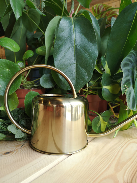 Picture of Medium watering can - gold