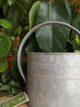 Picture of Large watering can - galvanised