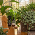 Picture of Fortifying Houseplant Plant Food | Plantsmith