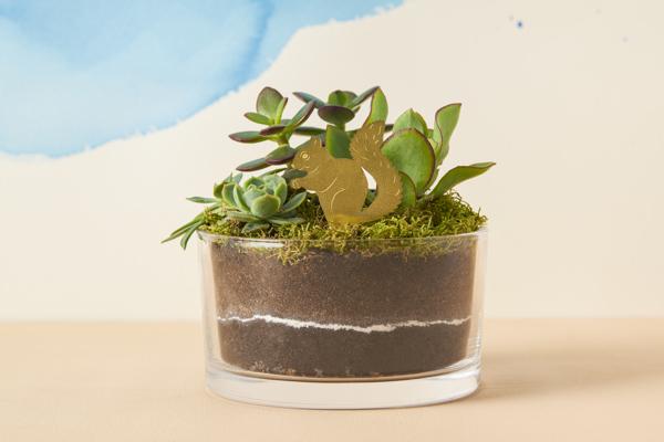 Picture of Plant Animals - squirrel