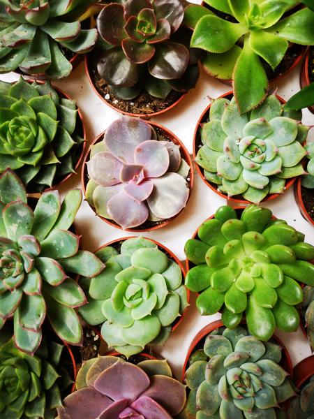 Picture of 3x Mini succulent & cacti