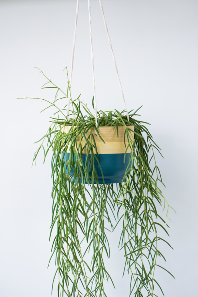 Picture of Bamboo hanging pot   Ivyline