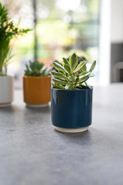 Picture of Eno pot blue | Ivyline