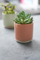 Picture of Eno pot pink | Ivyline