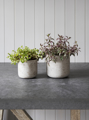 Picture of Set of two cement pots - stone   Garden Trading