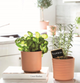 Picture of Terracotta pot | Ivyline