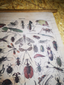 Picture of Insect print wall hanging