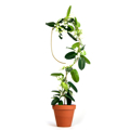 Picture of Metal Plant Support | Botanopia