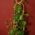 Picture of Chain Plant Support | Botanopia