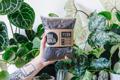 Picture of 2.5l Fern potting mix | Soil Ninja